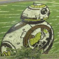 Star Wars Rice Paddies Appear in Japan's Aomori Prefecture