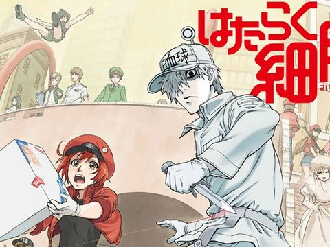 Cells at Work! Has Its Own Sake Starring White Blood Cell