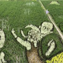 Rice Field Art Honors Work of Late Kyoto Animation Animator