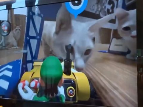 In Mario Kart Live, Your Cat is the Toughest Opponent