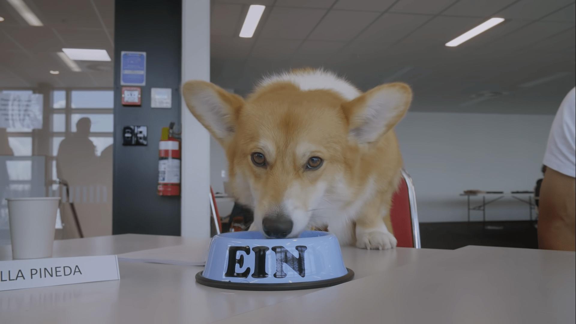 Good boy Ein